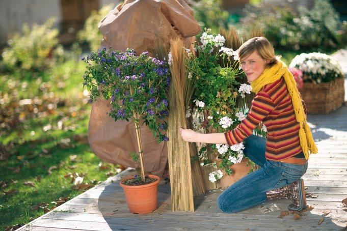 Jetzt ist höchste Zeit, Topf- und Kübelpflanzen winterfest zu machen! Bild: Toom Baumarkt