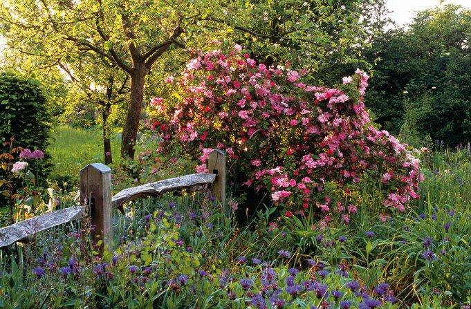 """Wertvolle Profi-Tipps zur Inszenierung von Rosen im eigenen Garten finden Sie in """"schön + grün"""", unserem E-Book für alle Gartenfreunde."""