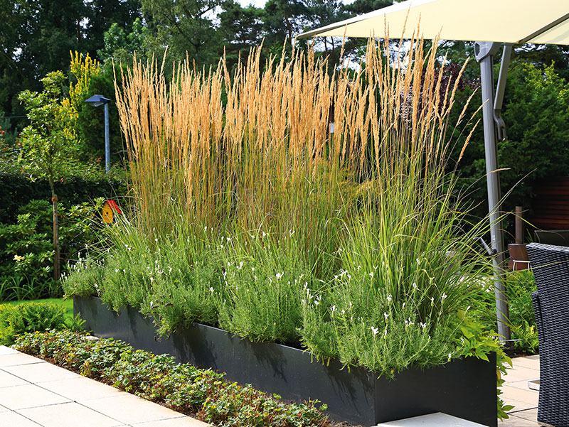 Terrassenbegrünung mit Kübelpflanzen