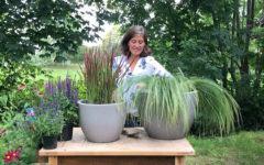 Bepflanzung von Terrassenkübeln